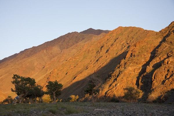 19, JHU sunset with khadag tree