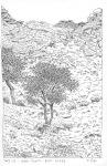 Elm trees, Ikh Nartiin Chuluu