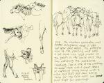 Mongol horses, Arburd Sands