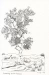 15-birch-tree
