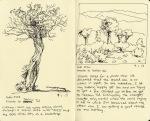 Gobi, trees en route