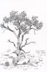 24-elm-tree
