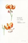 3-wild-lilies
