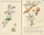 Wildflowers, Khomyn Tal