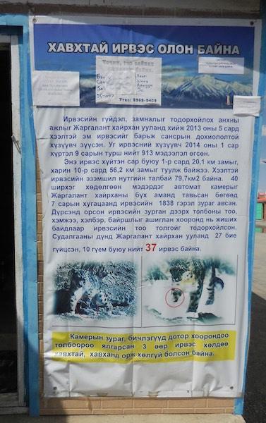 Snow leopard information poster