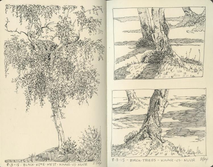 Birch trees at campsite near Chandmani