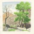 Aspen trees, Maikhan Nature Reserve