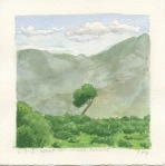Lone tree, Hogno Han Nature Reserve