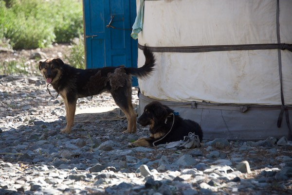The herder's dogs. They were very aggressive. I took this photo from the car.