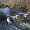 Hailey icy pond
