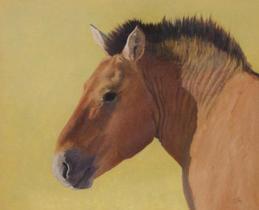 Takhi Stallion, Khomyn Tal
