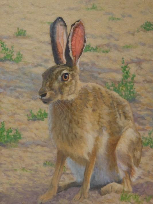 "Tolai Hare oil 16x12"""