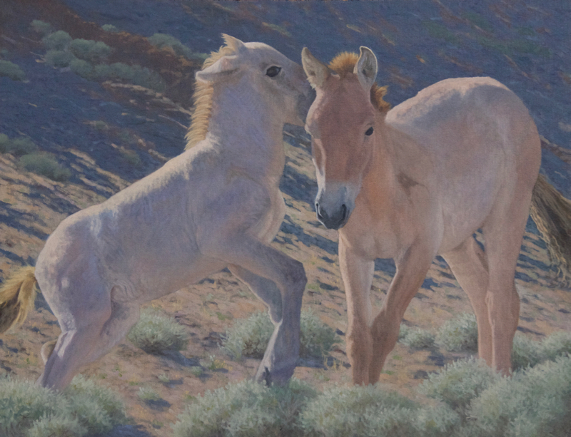 "Horsin' Around (Khomyn Tal Takhi Foals) oil 28x36"""