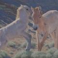 Horsin' Around (Khomyn Tal Takhi Foals)