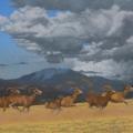 On the Run (Altai Argali, Hokh Serkhiin Nuruu, Mongolia)