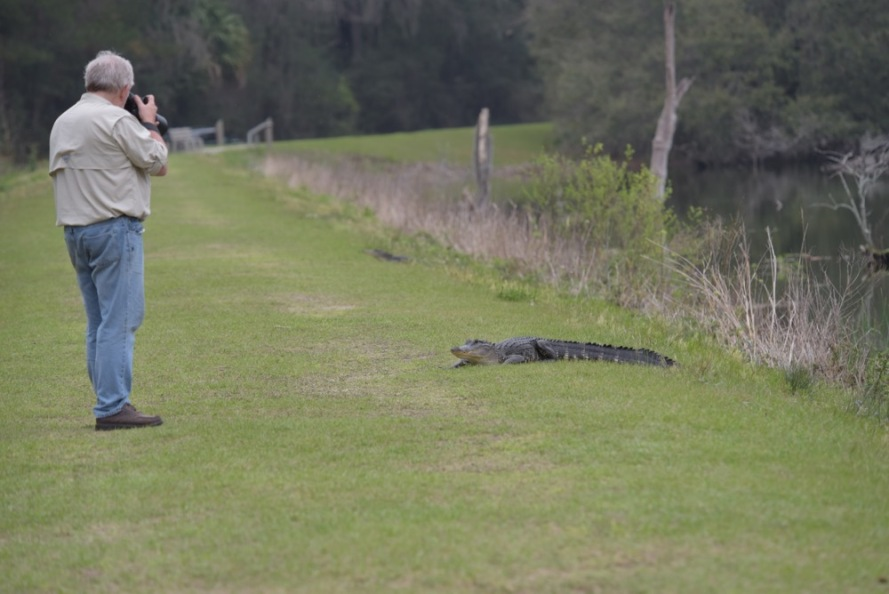 There were a lot of little gators by the edge of the dike. This one came up onto the grass and Alan got some good close-ups.