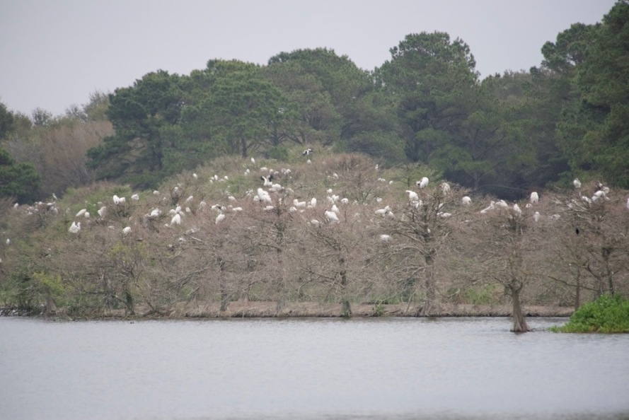 The refuge is known for it's wood stork rookery.