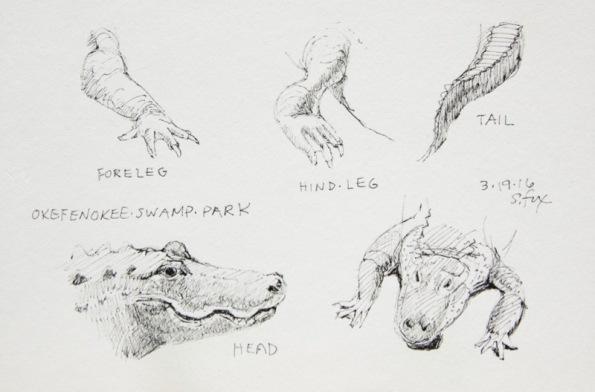 Alligator details 5