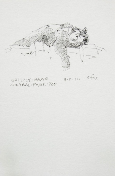 Resting grizzly bear, Central Park Zoo, New York