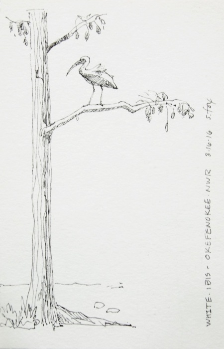 Ibis in tree