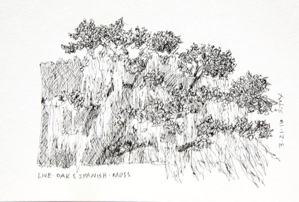 Live oak and moss