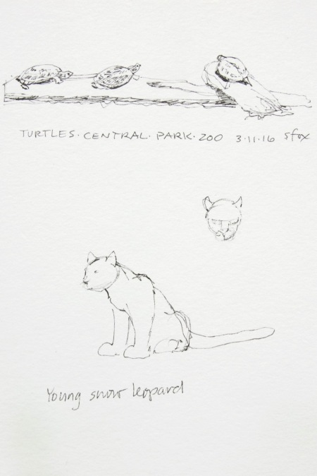 Turtles, snow leopard cub, Central Park Zoo, New York