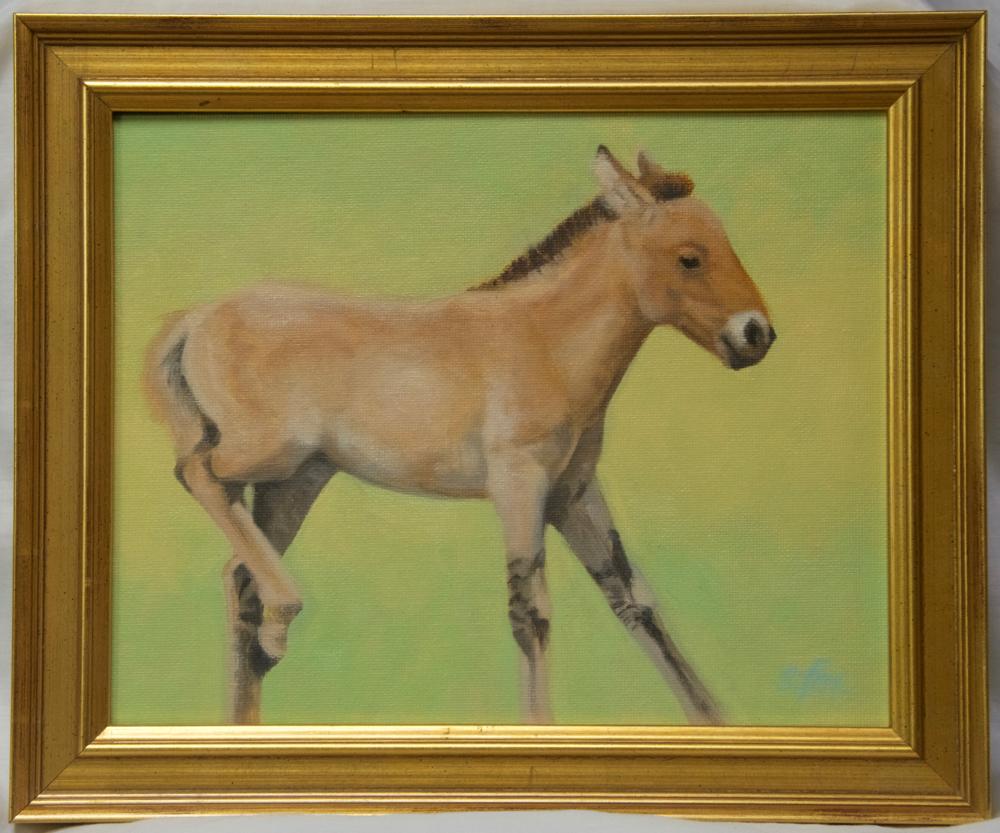 """Hustai Takhi Foal 8x10"""" oil"""