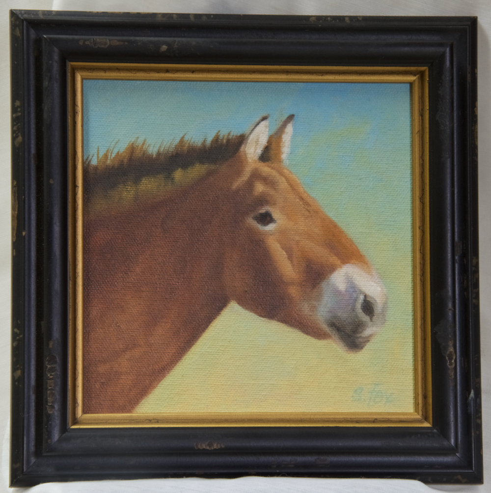 Hustai Takhi Stallion oil 6x6""