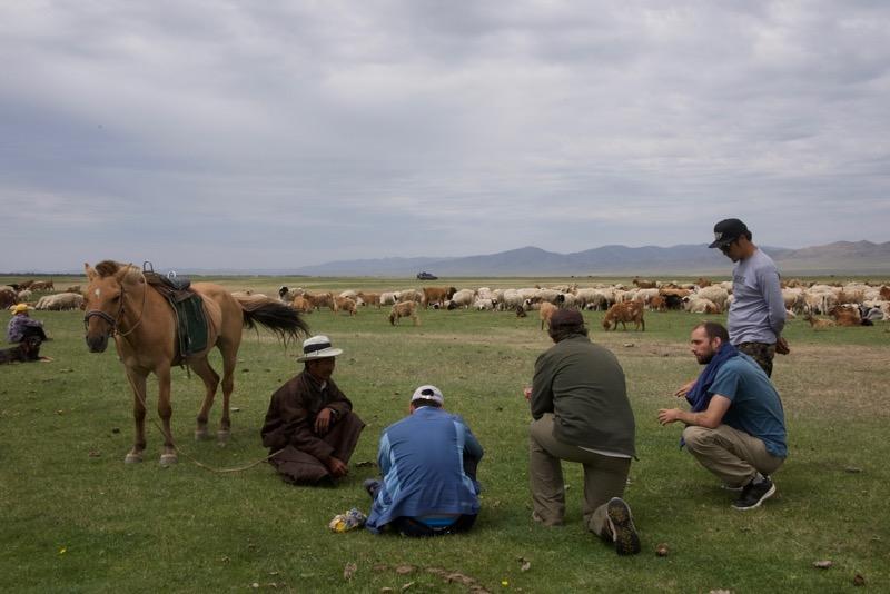 MBDP herder – Version 2