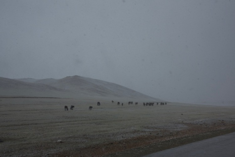 11. horses and snow
