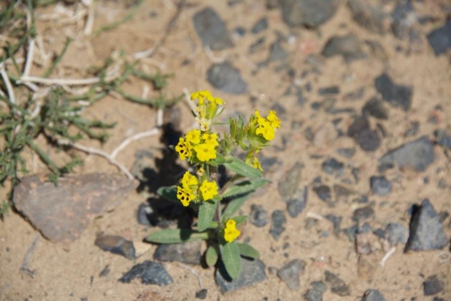 2. yellow flowers