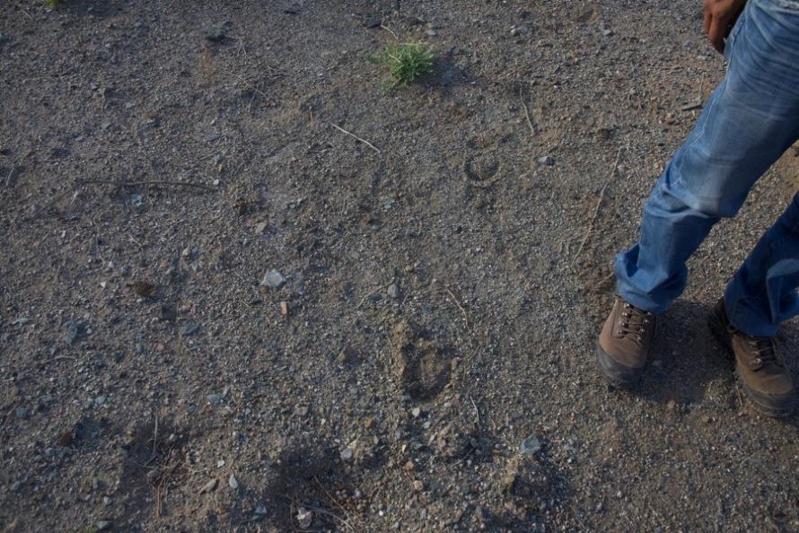 3. khulan tracks