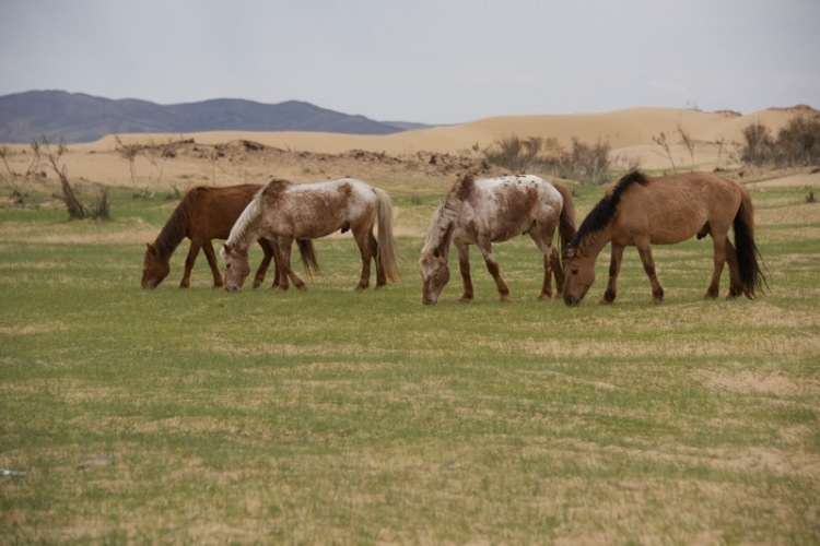 3. lunchtime horses
