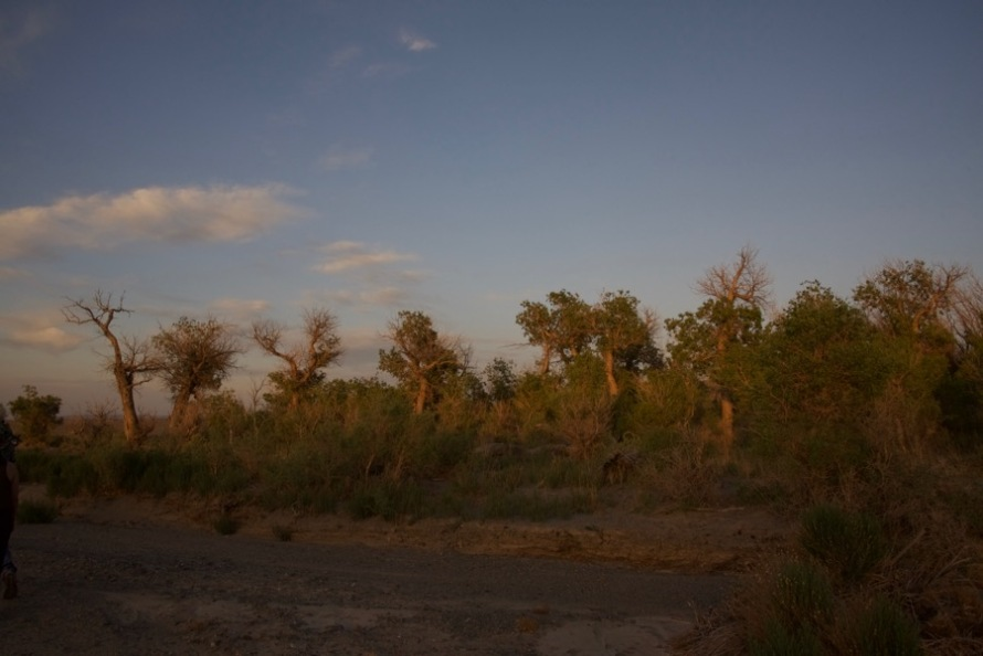 30. sunset trees