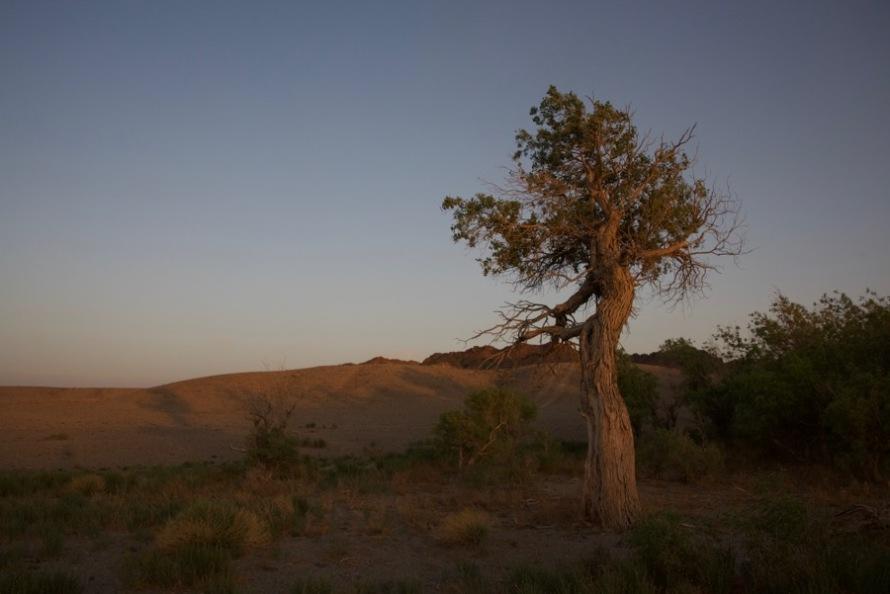 31. sunset old tree