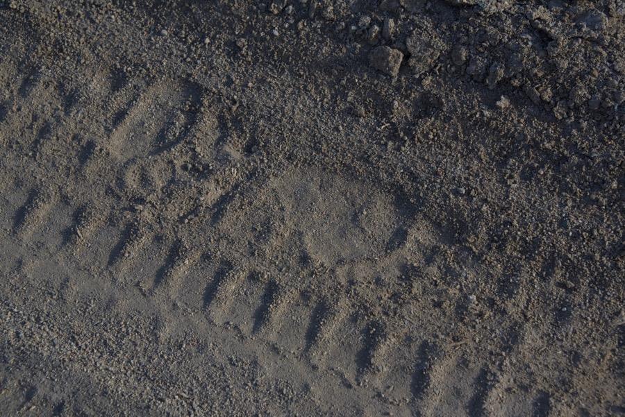 5. bear tracks