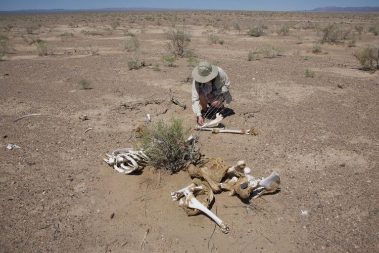 5. Kim and camel bones