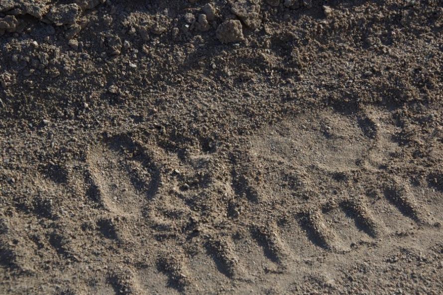 6. bear tracks