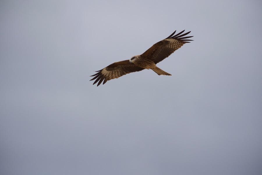 13-kite