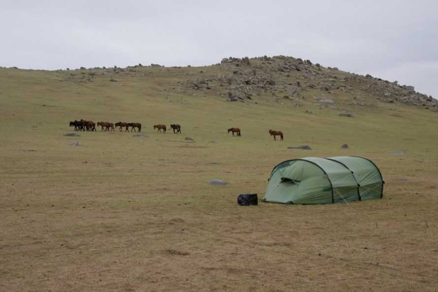 16-horses-and-tent