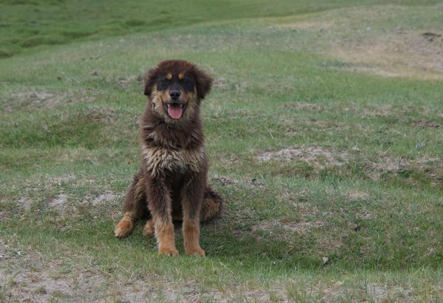 17-bankhar-pup