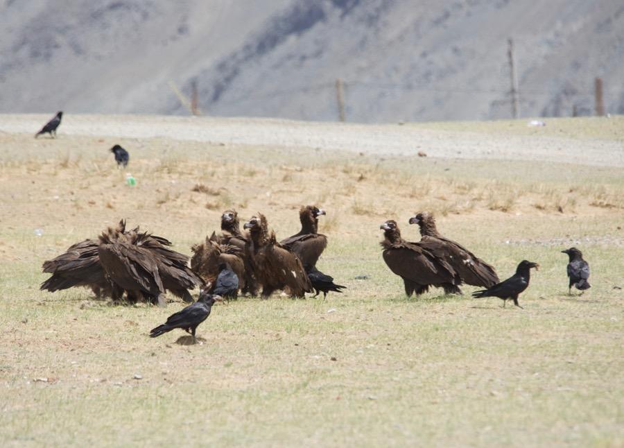 28. vultures