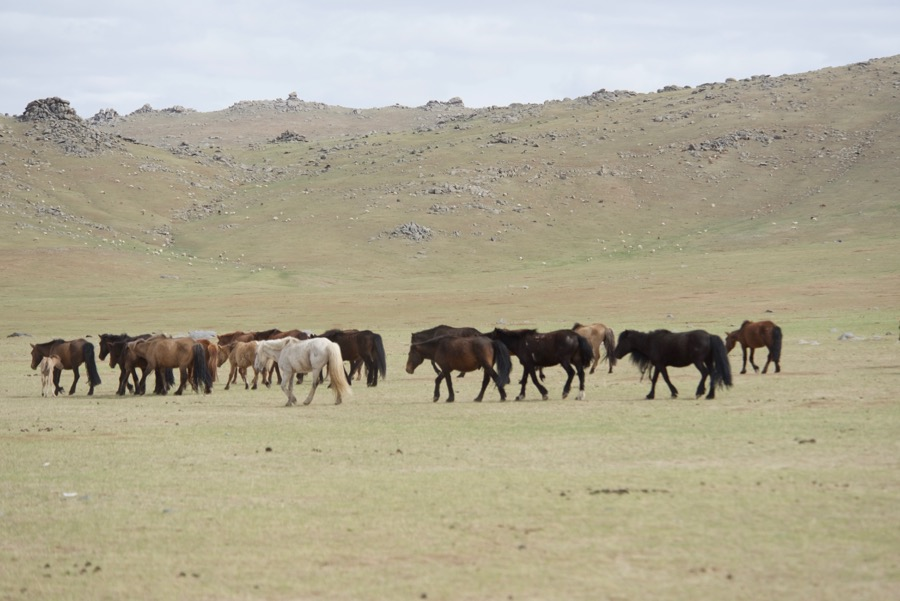 29. Horses