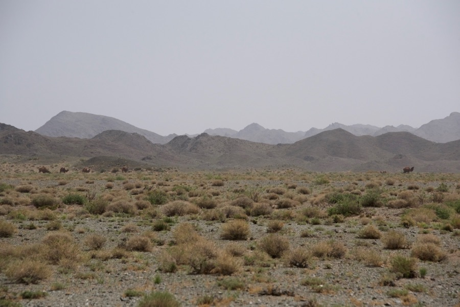 3. mts. and camels