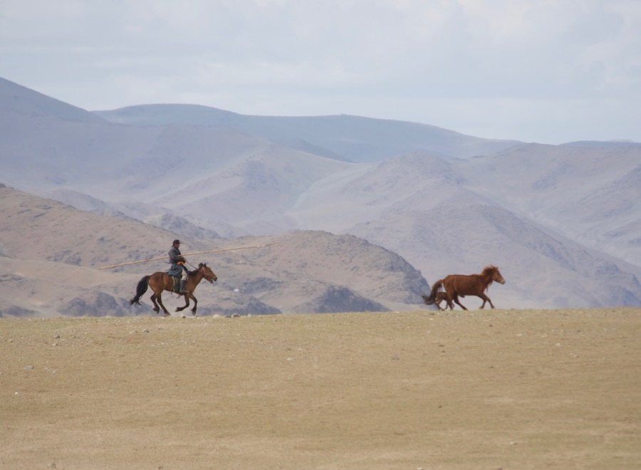30. herder chasing horse