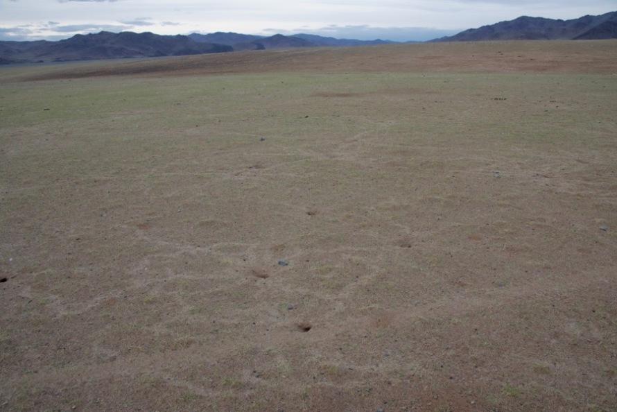 4-nazca-lines