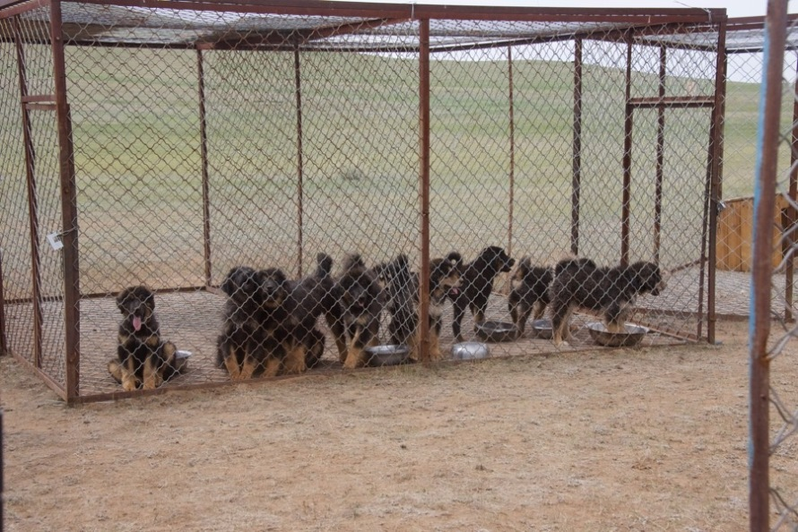 7-puppies