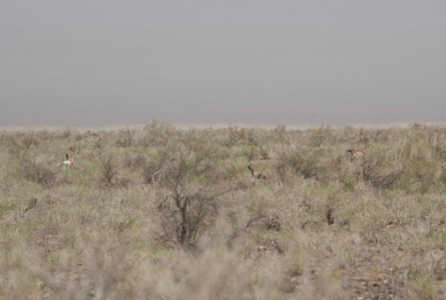 8. gazelles