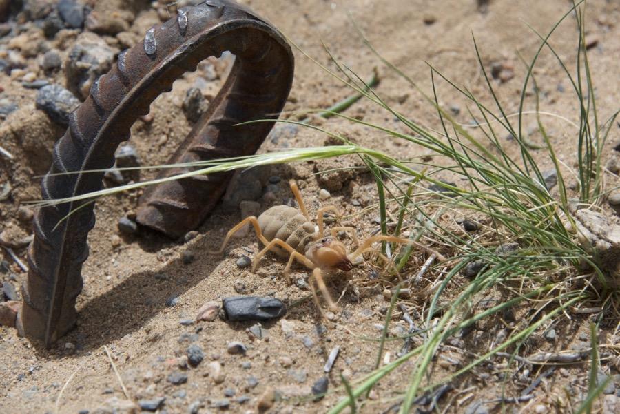 9. arachnid