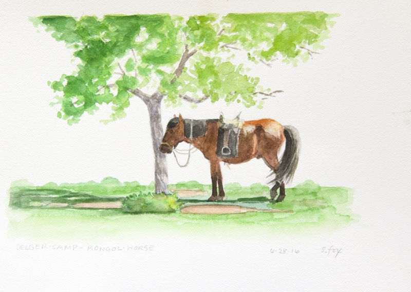 delger-camp-horse